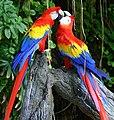 Macaw to couple.jpg