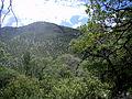 MadreanEvergreenWoodland 2 (15912561726).jpg