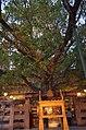 Mahabodhi Temple Complex, Bodhgaya (8717525416).jpg