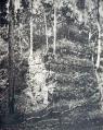 Maler Upper Usumatcintla Plate 14 Topoxté Main Temple.png