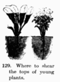 Manual of Gardening fig129.png