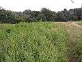 Manure heap near Upper Cote, Fixby - geograph.org.uk - 225363.jpg