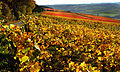 Markelsheim beliebter Wein- un Erholungsort. Tauberberg.jpg