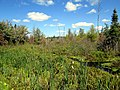 McKenna's Marsh, PEI (9645188720).jpg