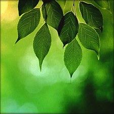 Memory of green.jpg