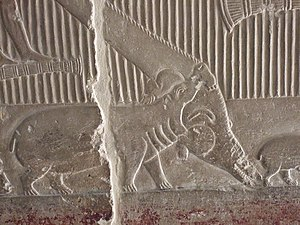 Mereruka - An adult hippopotamus is depicted attacking and killing a crocodile in Mereruka's tomb.