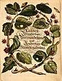 Merian - Der Raupen wunderbare Verwandelung und sonderbare Blumennahrung - 1.jpg