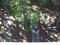 Micanopy Paynes Prairie obs twr down01.jpg