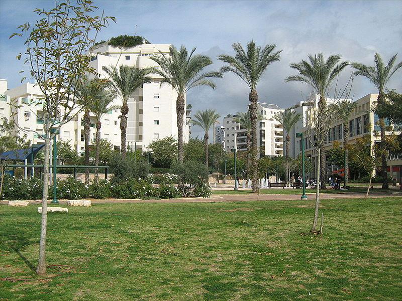 grassy lawn, palm trees and white buildings