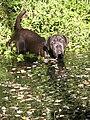 Monet Mastiff.jpg