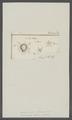 Monoculus sylenus - - Print - Iconographia Zoologica - Special Collections University of Amsterdam - UBAINV0274 100 01 0004.tif