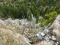 Mont Risoux 5.jpg