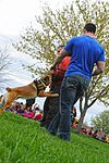 Month of Military Child MWD demonstration 150414-F-OH119-477.jpg