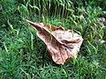 Moos mit Sporenstängel.jpg