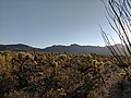 Morning in the Sonoran Desert.jpg