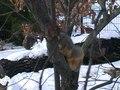 File:Morton Arboretum Winter Squirrel 2005.webm