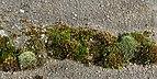 Moss on a cement tile.jpg