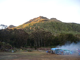 Mount Apo - Forest clearing in Mount Apo's old-growth rainforest