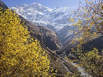 1950 French Annapurna expedition - Annapurna from Miristi Kola valley