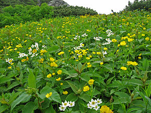 Mount Kita - Kusasuberi