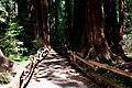 Muir Woods, California - panoramio.jpg
