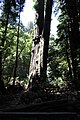 Muir Woods National Monument 2010 05.JPG