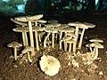 Mushroom-Vellore-Tamilinadu.jpg