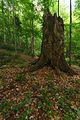 Národná prírodná rezervácia Stužica, Národný park Poloniny (18).jpg