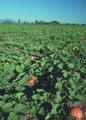 NRCSOR00048 - Oregon (5791)(NRCS Photo Gallery).tif
