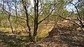 NSG Fockbeker Moor Torfkante.jpg
