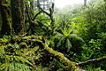 NZL-milford-regenwald.jpg