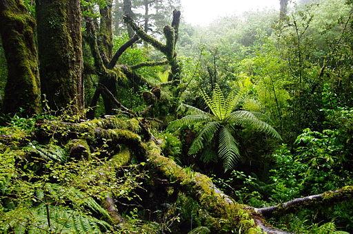 512px-NZL-milford-regenwald Regenwaldklima