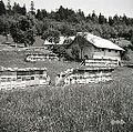 Nanos št. 2, pri Blažonu, čebelnjaki na paši 1958.jpg