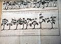 Naredba Kolegija za sume o hrastovim sumama u Istri 1777 2.jpg