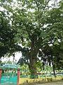 Natividad,Pangasinanjf8717 05.JPG