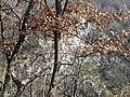 Natura d'inverno - panoramio.jpg