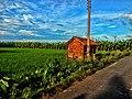 Natural Beauty of a Farmland in Nagarukhra, India.jpg