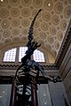 Natural History Museum (4691108566).jpg