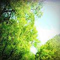 Nature a akchour.jpg
