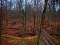 Naturpark Schönbuch - panoramio (15).jpg