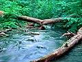 Naturschutzgebiet Neandertal NRW, Fluss Düssel, Fotograf J. & N. Suchorski 4.jpg