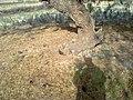 Navidhand new 301 - panoramio.jpg