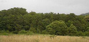 Negreira - Image: Negreira Bosque 1