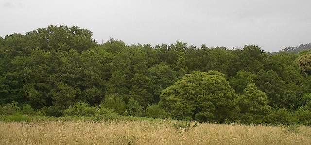 Negreira Bosque 1