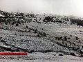 Neva en Ixchiguan San Marcos (8413434223).jpg