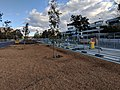 New brittle gums in Northbourne Avenue Canberra.jpg
