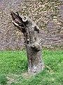 Nijmegen - Holle boom met vogel v2.jpg