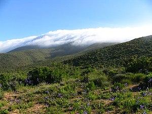 Valdivian temperate rain forest - Valdivian cloud forest Bosque de Fray Jorge in semi-arid Norte Chico.