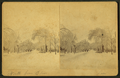 North (Street), from Elm (Street), Saco, by Sawtelle, E. E. (Edward E.).png
