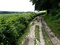 North Downs Way - geograph.org.uk - 1393170.jpg